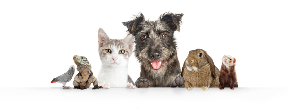 Pet Trusts (Estate Planning For Your Pets) Washington DC Legal Article Featured Image by Antonoplos & Associates